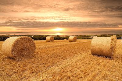 [新聞] 大豐收 – 波蘭八月收成季